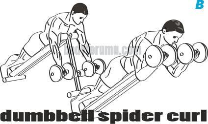 Dumbbell Spider Curl nasıl yapılır?