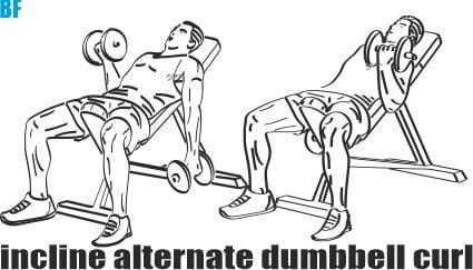 Dumbbell Biceps Curl Nasıl Yapılır?