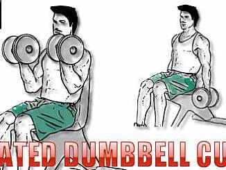Seated Dumbbell Curl Nasıl Yapılır?