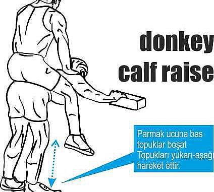 Eşek Kalfı Hareketi & Donkey Calf Raises